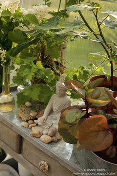 Fig tree and buddha on the potting table Romppala - Lindan pihalla