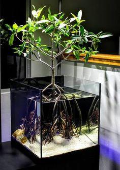 45 Stunning Aquarium Design Ideas for Indoor Decorations - Page 16 of 45 - SooPush - aquascaping Aquarium Design, Home Aquarium, Reef Aquarium, Saltwater Aquarium, Aquarium Fish Tank, Freshwater Aquarium, Saltwater Tank, Goldfish Aquarium, Planted Aquarium