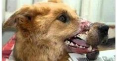 Petition online: Help save the dogs of Brazil