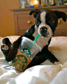 if you ask for a puppuccino at starbucks they will give you a cup