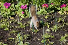 How to Keep Animals Out of Your Garden