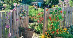 Der Bauerngarten bietet alles, was das Leben im Garten so schön macht: eine bunte Blütenvielfalt fürs Auge, Gemüse und Obst zum Naschen und ein ungezwungenes Ambiente. Hier finden Sie Tipps zur Planung und Bepflanzung.