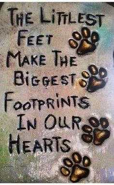 Dogs love sayings rainbow bridge 69 ideas Cat Quotes, Animal Quotes, Puppy Love Quotes, Dog Loss Quotes, Pet Quotes Dog, Qoutes, I Love Dogs, Cute Dogs, Pet Loss Grief