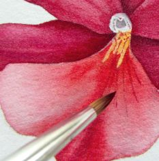 How to paint watercolour botanicals - part three