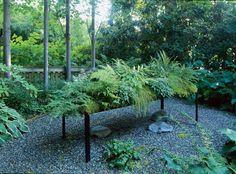 Planting a low-water fern garden - Garden Types Garden Types, Organic Gardening, Gardening Tips, Gardening Vegetables, Gardening Supplies, Indoor Gardening, Growing Vegetables, Market Garden, Nyc
