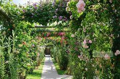Rose covered pegola. David Austin Rose Gardens, Shropshire | Howard Rice