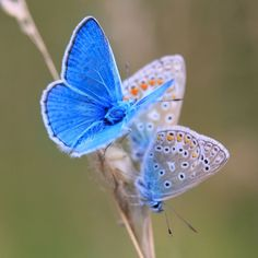 a beautiful world Beautiful Bugs, Beautiful Butterflies, Beautiful World, Butterfly Life Cycle, Butterfly Art, Butterfly Photos, Flying Flowers, Moth Caterpillar, Bugs And Insects