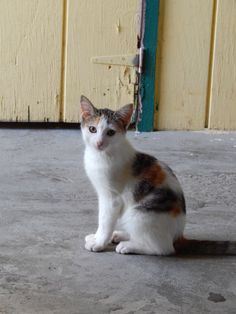 This little kitty resides on Manza's Farm