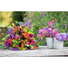 I have just purchased Hardy Annual Cutting Patch Collection from Sarah Raven - https://www.sarahraven.com/flowers/seeds/annuals/hardy_annual_cutting_patch_collection.htm