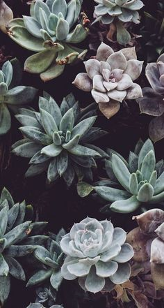vintage cactus wallpaper iphone vintage images - vintage cactus wallpaper iphone vintage images The Effective Pictures We Offer You About cactus car - Plant Wallpaper, Flower Wallpaper, Cool Wallpaper, Succulents Wallpaper, Trendy Wallpaper, Aztec Wallpaper, Mobile Wallpaper, Google Pixel Wallpaper, Drawing Wallpaper