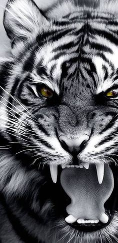 Angry tiger - # You are in the right place about animal wallpaper iphone sea Here we offer you the m Angry Animals, Animals And Pets, Cute Animals, Fierce Animals, Tiger Tattoo, Cat Tattoo, Majestic Animals, Animals Beautiful, Tiger Fotografie
