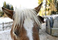 Mongolia, Horses, Animals, Animales, Animaux, Animal, Animais, Horse