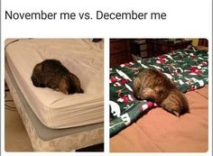 Animal Memes, Funny Animals, Cute Animals, Holiday Memes Funny, Giving Up On Life, Morning Humor, Stupid Funny Memes, True Memes, Funniest Memes