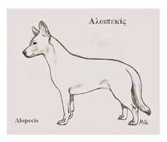 Alopekis   http://en.wikipedia.org/wiki/Alopekis