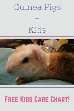 """I get the question """"how are guinea pigs with kids?"""" all the time. However, that is not the question that needs to be asked, it should be asked """"how are kids with guinea pigs?&#822…"""