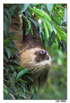 I absolutely will not apologize for my love of sloths...they are such silly neat and adorable creatures