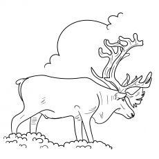 Top 20 Free Printable Reindeer Coloring Pages Online Coloring Pages Animal Drawings Caribou