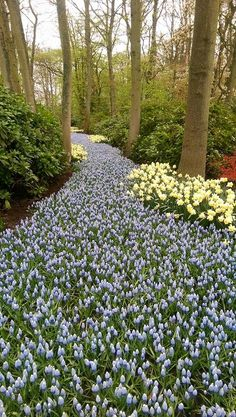 Beautiful Keukenhof.