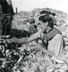 Artur Pastor foi um fotógrafo português (n. 1 de Maio de 1922, em Alter do Chão, f. 1999): Desfolhada, 1941