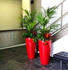 tall container plants - Google Search
