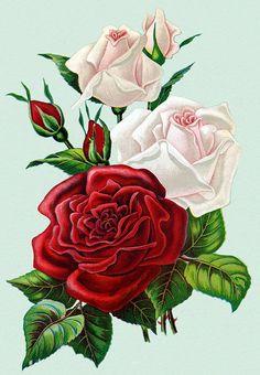 Прекрасные розы... - Схемы вышивки - Miss_Ikss - Авторы - Портал «Вышивка крестом»
