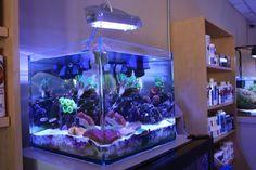 Rimless Aquarium Club - Page 37 - Reef Central Online Community Home Aquarium, Aquarium Design, Reef Aquarium, Saltwater Tank, Saltwater Aquarium, Rimless Aquarium, Turtle Habitat, Aquatic Turtles, Club Lighting