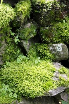 I just love mossy rocks, & bring them home when I find then in the woods!  The fuzzier the better!  ;o)