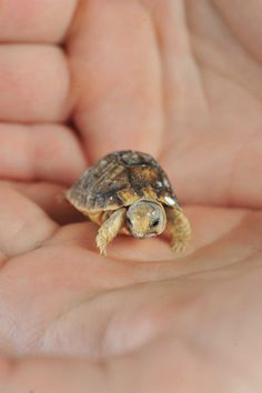 Photos d'animaux : un bébé tortue
