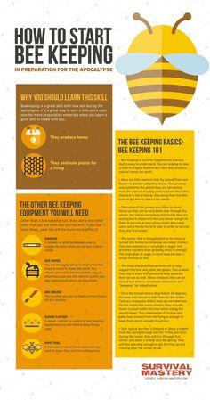 Start bee keeping infographic Honey Bee Hives, Honey Bees, Raw Honey, Honey Bee Facts, Beekeeping For Beginners, Bee Supplies, Bee Farm, I Love Bees, Backyard Beekeeping