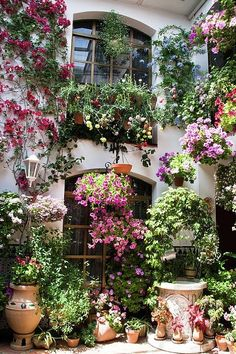 Cordoba, Spain for Festival of Patios with gorgeous flowers everywhere