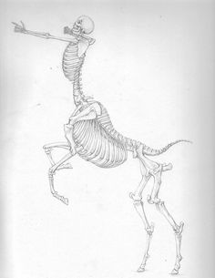 -Centaur Skeleton- by Banvivirie.deviantart.com on @DeviantArt