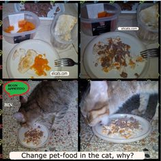 Change pet-food in the cat why - http://elicats.com/change-pet-food-in-the-cat-why/ As we know the cat  is particularly demanding and a creature of habit when it comes to food, if he is healthy there is no problem, we will do everything possible to make him/her happy and buy him/her the most delicious and appealing food.      Change pet-food in the cat, why? What happens ...