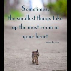 I need to put this quote with a picture of Scamp :)