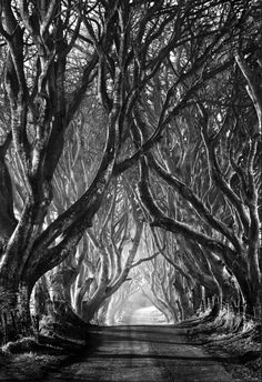 dark hedges, photography, trees, stephen emerson