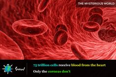 #health #cells #facts