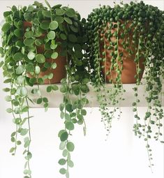 String of pearls and string of nickels.