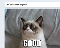 Bermudez hehe so funny lol - im agent bermudez, from the fun police grumpy cat Funny Animal Pictures, Funny Images, Funny Animals, Funny Grumpy Cat Memes, Funny Dogs, Grumpy Kitty, Funny Kittens, Memes Humor, Cat Memes Clean