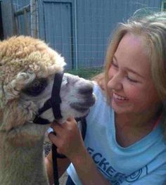 Training my alpacas - they are halter and lead rope trained.  Thanks to my training helper this year.