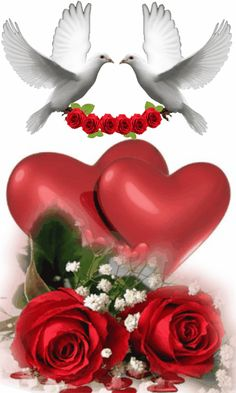 i love you images Dove Images, Dove Pictures, Love Heart Images, I Love You Images, Love You Gif, Beautiful Love Pictures, Beautiful Gif, Beautiful Birds, Flowers Gif