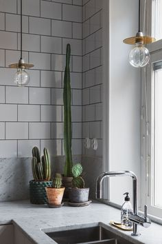 Indoor Plants | A cacti cluster on the kitchen counter for a touch of green