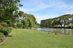 King Edward Park Hawera NZ Duck Pond, New Zealand, Golf Courses, King, Thoughts, Park, Parks, Ideas