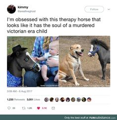 """Pic of a little horse under the caption, """"I'm obsessed with this therapy horse that looks like it has the soul of a murdered Victorian era child"""" funny captions funny humor funny memes animal funny Funny Animal Memes, Cute Funny Animals, Stupid Funny Memes, Funny Relatable Memes, Haha Funny, Funny Cute, Funny Posts, Funny Stuff, Random Stuff"""
