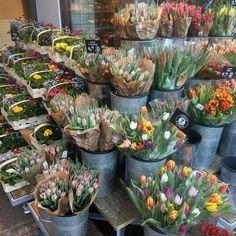 My Flower, Beautiful Flowers, Flower Dance, Estilo Cool, Flower Aesthetic, Pretty Pictures, Aesthetic Pictures, Planting Flowers, Flower Arrangements