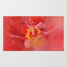 Salmon Hibiscus 1 - Floral by Jai Johnson Floral Throw Pillows, Throw Rugs, Floral Tote Bags, Fluffy Pillows, Artistic Photography, Hibiscus, Ipad Case, Salmon, Fine Art Prints