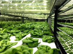 Local Roots TerraFarm Local Roots shipping container farms hydroponic less water more food shipping container farms agriculture future of agriculture Indoor Farming, Hydroponic Farming, Indoor Vegetable Gardening, Hydroponic Growing, Aquaponics System, Container Gardening, Diy Hydroponics, Aquaponics Fish, Agriculture