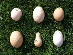 Egg & Laying Issues, Health and Common Diseases - The Chicken Vet