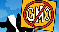 A large consumer study* from market researcher Health Focus International spanning 16 major consumer markets includes this pretty jaw-dropping statistic: 87% of consumers globally think non-GMO foods are 'somewhat', or 'a lot' healthier.