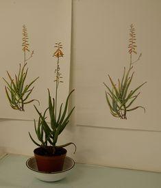 sibonelo chiliza, kzn botanical art, south african botanical art
