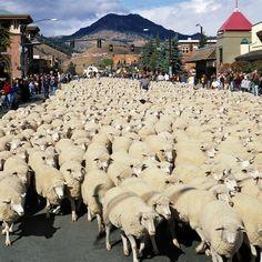 Trailing of the Sheep Festival (Idaho)