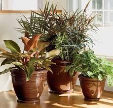 Mother in law tongue potted for front door porch area - Decoracion con plantas de interior ...